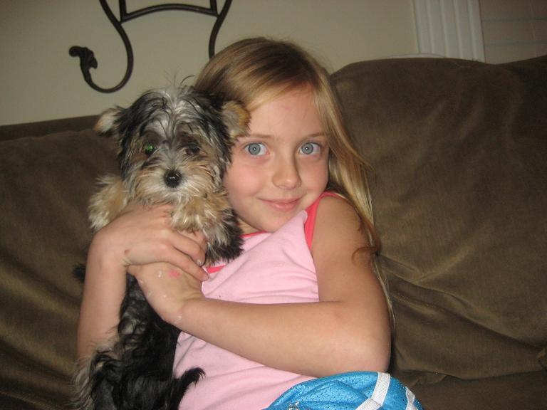 Molly the Morkie Puppy Previously for Sale